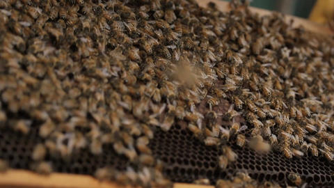 Many Honey bee macro footage of bee hive and honey production beekeeper Footage
