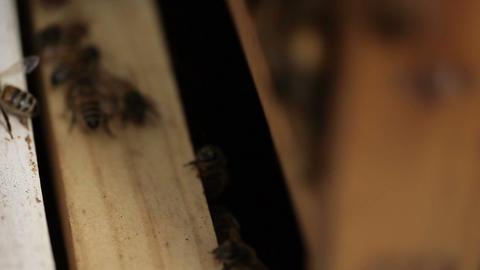 Macro Honey bee macro footage of bee hive and apiarist beekeeper Live Action