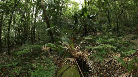 Temperate Rainforest Australian Landscape stock footage