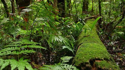 Rainforest - Australian Landscape Live Action