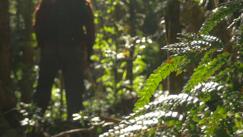 Hiking man trekking outdoors in rainforest Footage