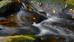 Clean fresh mountain water flowing over moss covered rocks autumn colors Footage