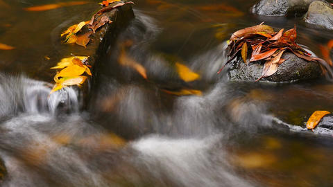 Fresh natural spring water cascading over stones autumn colors Footage