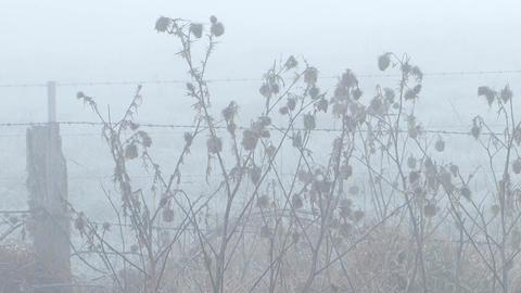 Thistle Morning Mist Footage