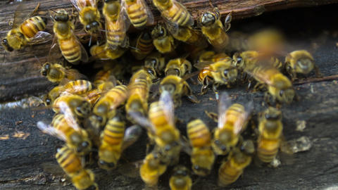Bees in the hive Footage