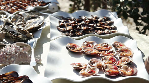 oysters mussels, sea urchins seafood buffet Live Action